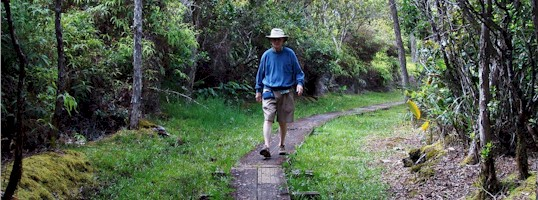 The late Dr. Loron N. McGillis hikes the Alakai Swamp Trail on the Garden Island of Kaua'i, Hawaii.